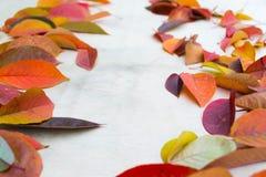 秋叶14 图库摄影