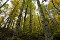 秋天、森林、五颜六色的叶子和瀑布,小河,湖视图 免版税库存图片