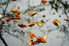 秋天、森林、五颜六色的叶子和瀑布,小河,湖视图 库存图片