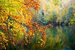 秋天、森林、五颜六色的叶子和瀑布,小河,湖视图 免版税图库摄影