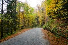 秋天、森林、五颜六色的叶子和瀑布,小河,湖视图 库存照片