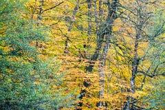 秋天、森林、五颜六色的叶子和瀑布,小河,湖视图 免版税库存照片