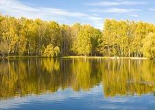 秋天、湖和桦树森林 库存照片