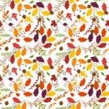 秋天、秋天或者感恩传染媒介花纹花样 免版税图库摄影