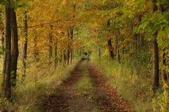 秋天。 库存图片