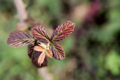 秋天一片不同干燥叶子  库存图片
