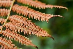 秋天一片不同干燥叶子  图库摄影