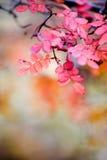 秋天上升了 图库摄影