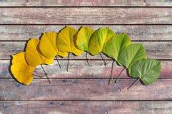 秋天上色了从绿色的叶子转折与在木头的黄色 免版税图库摄影