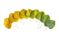 秋天上色了从绿色的叶子转折与被隔绝的黄色 免版税库存照片