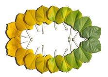 秋天上色了从绿色的叶子转折与黄色 免版税库存照片