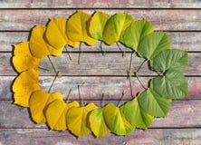 秋天上色了从绿色的叶子转折与黄色 库存图片
