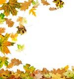 秋天上色了叶子多 免版税库存图片