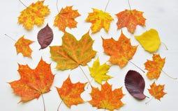 秋天上色了叶子背景flatlay 图库摄影