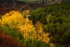 秋天上色了形成一个美好的风景的那些树 免版税库存图片