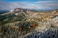 秋天上色了有用第一雪盖的树的森林 库存照片