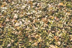 秋天上色了森林叶子摘要-葡萄酒影片作用 免版税库存照片