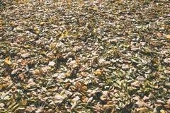 秋天上色了森林叶子摘要-葡萄酒影片作用 免版税库存图片