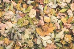秋天上色了森林叶子摘要-葡萄酒影片作用 图库摄影