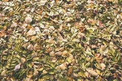 秋天上色了森林叶子摘要-葡萄酒影片作用 免版税图库摄影