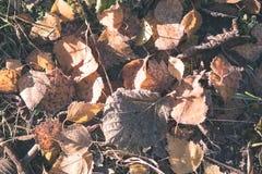 秋天上色了森林叶子摘要-葡萄酒影片作用 库存图片