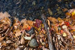 秋天上色叶子和水 库存照片