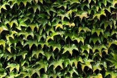 秋天上色叶子模式无缝的纹理 免版税库存照片