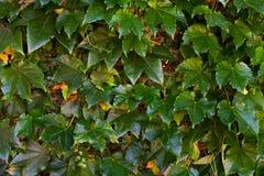 秋天上色叶子模式无缝的纹理 图库摄影