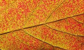 秋天上色叶子模式无缝的纹理 库存图片