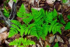 秋天上色叶子模式无缝的纹理 库存照片