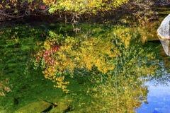 秋天上色叶子水反射摘要Wenatchee河华盛顿 免版税图库摄影