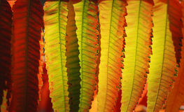 秋天上色叶子 库存图片