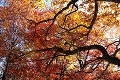 秋天上色摘要 库存照片