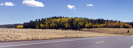 秋天上色森林叶子亚利桑那 免版税库存照片