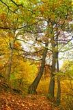 秋天上色森林路生动 免版税库存图片