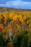 秋天上色森林 库存图片