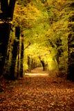 秋天上色森林 免版税库存照片