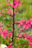 秋天上色秀丽明亮的背景自然 免版税库存图片
