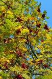 秋天上色结构树 库存图片