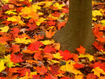 秋天上色背景 库存照片