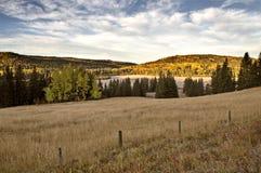 秋天上色赛普里斯小山加拿大 免版税库存图片