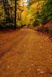秋天上色路森林 免版税库存图片