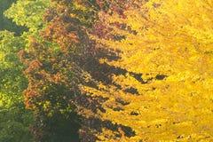 秋天上色转折 库存照片