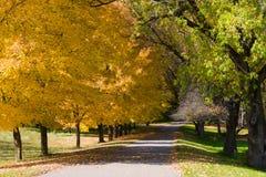 秋天上色金黄结构树 库存图片