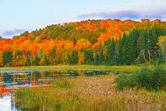 秋天上色阿尔根金族公园,安大略,加拿大 库存照片