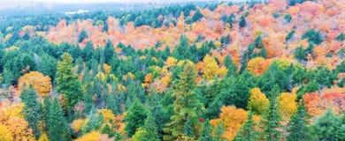 秋天上色阿尔根金族公园,安大略,加拿大 图库摄影