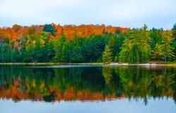 秋天上色阿尔根金族公园,安大略,加拿大 免版税库存图片