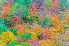 秋天上色阿尔根金族公园,安大略,加拿大 免版税库存照片