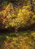 秋天上色水反射摘要Wenatchee河华盛顿 免版税库存图片