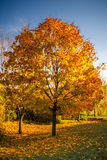秋天上色结构树 免版税库存图片
